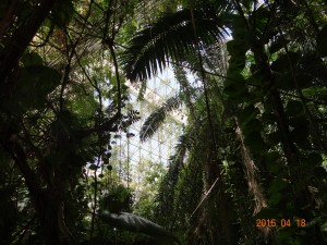 Rain Forest, Biosphere 2, Oracle, AZ