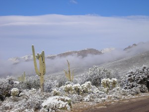 Snow in the Arizona Desert