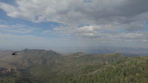 Mt. Lemmon, AZ - Shrike