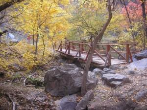 Bridge over creek in Garden Canyon, Arizona