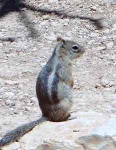 Ground Squirrel, Bryce Canyon, Utah