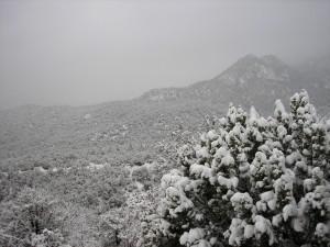 Portal, AZ 2007